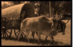 ox-wagon jpg
